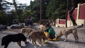 A woman feeds the stray dogs. April 21, 2020. Phayul photo-Tenzin Leckphel.